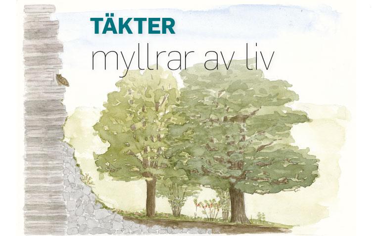 takter-myllrar-av-liv-1