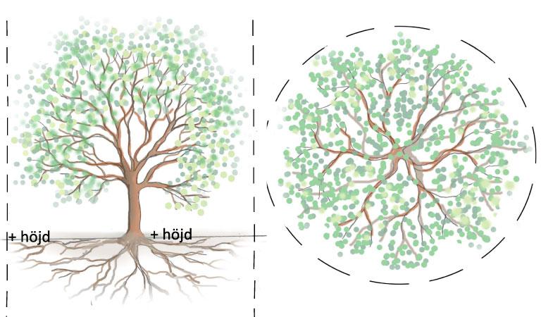 Träd-rot-spridning