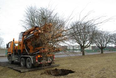 trädplantering_2